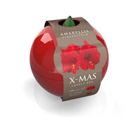 Amaryllis Christmas-Ball, rot