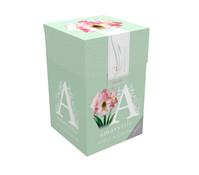 Amaryllis Classic Apple Blossom