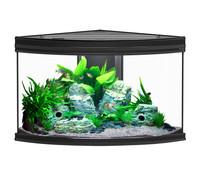 Aquatlantis Fusion Corner 100, Aquarium