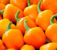 Bioland Paprika, gelb