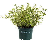 Bioland Thymian