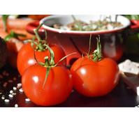 Bioland Tomate, veredelt