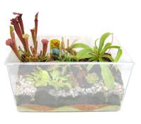 Carnivoren, fleischfressende Pflanzen im Aquarium, 34 x 19 x 25 cm