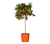 Citrus in Sorten