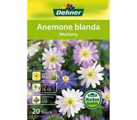 Dehner Anemone blanda 'Mischung'