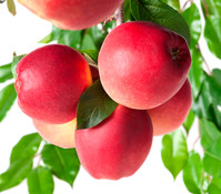 Dehner Apfel 'Gala'