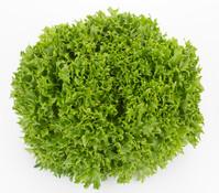 Dehner Bio Salat 'Salanova', 6er Schale