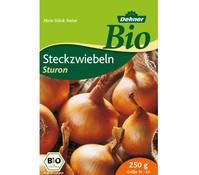 Dehner Bio Steckzwiebel 'Sturon'