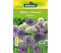 Dehner Blumenzwiebel Allium-Zierlauch 'Mischung'