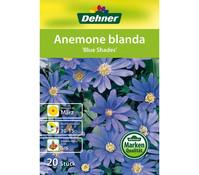 Dehner Blumenzwiebel Anemone Blanda 'Blue Shades'