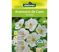 Dehner Blumenzwiebel Anemone de Caen 'The Bride'