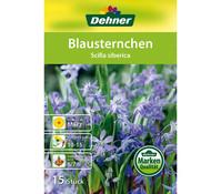 Dehner Blumenzwiebel Blausternchen 'Scilla siberica'