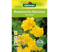 Dehner Blumenzwiebel Botanische Narzisse 'Pencrebar'