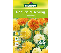Dehner Blumenzwiebel Dahlien-Mischung 'Dandelion'