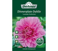 Dehner Blumenzwiebel Dinnerplate-Dahlie 'Lavender Perfection'