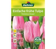 Dehner Blumenzwiebel Einfach frühe Tulpe 'Christmas Dream'