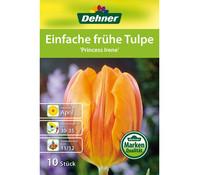 Dehner Blumenzwiebel Einfach frühe Tulpe 'Princess Irene'