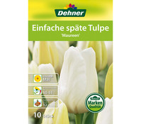 Dehner Blumenzwiebel Einfache Späte Tulpe 'Maureen'