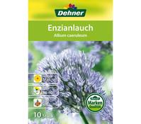 Dehner Blumenzwiebel Einzianlauch 'Allium caeruleum'