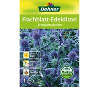 Dehner Blumenzwiebel Flachblatt-Edeldistel 'Eryngium planum'