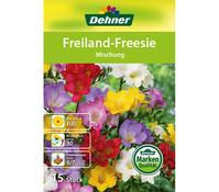 Dehner Blumenzwiebel Freiland Freesie 'Mischung'