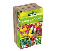 Dehner Blumenzwiebel Frühlings-Garten Mischung