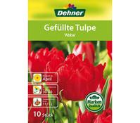 Dehner Blumenzwiebel Gefüllte Tulpe 'Abba'