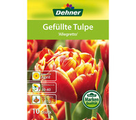 Dehner Blumenzwiebel Gefüllte Tulpe 'Allegretto'