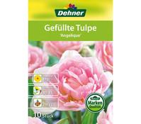 Dehner Blumenzwiebel Gefüllte Tulpe 'Angelique'