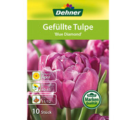 Dehner Blumenzwiebel Gefüllte Tulpe 'Blue Diamond'