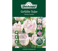 Dehner Blumenzwiebel Gefüllte Tulpe 'Shirley Double'