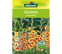 Dehner Blumenzwiebel Gladiole 'Jacqueline'