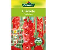 Dehner Blumenzwiebel Gladiole 'Traderhorn'