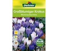 Dehner Blumenzwiebel Großblumiger Krokus 'Mischung blau/weiss'