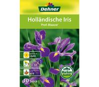 Dehner Blumenzwiebel Holländische Iris 'Prof. Blaauw'