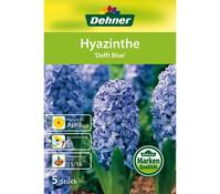 Dehner Blumenzwiebel Hyazinthe 'Delft Blue'