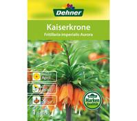 Dehner Blumenzwiebel Kaiserkrone 'Fritillaria imperialis Aurora'