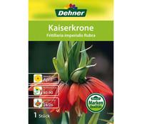 Dehner Blumenzwiebel Kaiserkrone 'Fritillaria imperialis Rubra'