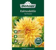 Dehner Blumenzwiebel Kaktusdahlie 'Hy Pimento'