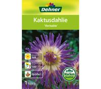Dehner Blumenzwiebel Kaktusdahlie 'Veritable'