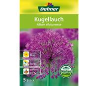 Dehner Blumenzwiebel Kugellauch 'Allium aflatunense'