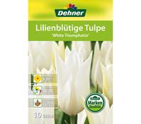 Dehner Blumenzwiebel Lilienblütige Tulpe 'White Triumphator'
