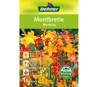 Dehner Blumenzwiebel Montbretie 'Mischung'