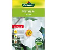 Dehner Blumenzwiebel Narzisse 'Actaea'
