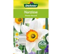Dehner Blumenzwiebel Narzisse 'Flower Rekord'