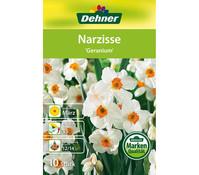 Dehner Blumenzwiebel Narzisse 'Geranium'