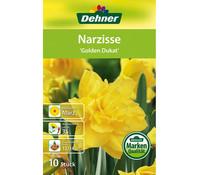 Dehner Blumenzwiebel Narzisse 'Golden Dukat'