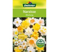 Dehner Blumenzwiebel Narzisse Mischung