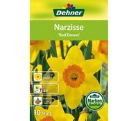 Dehner Blumenzwiebel Narzisse 'Red Devon'