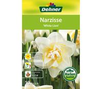 Dehner Blumenzwiebel Narzisse 'White Leon'